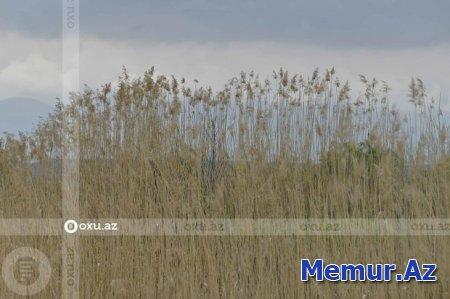 Ermənistanın ekoloji terroru Qarabağın səhralaşmasına səbəb olub - RƏSMİ